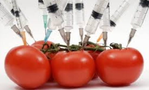 Test Detects Genetic Modification in Food