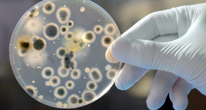 Scientists in Belfast develop new gel to fight superbugs