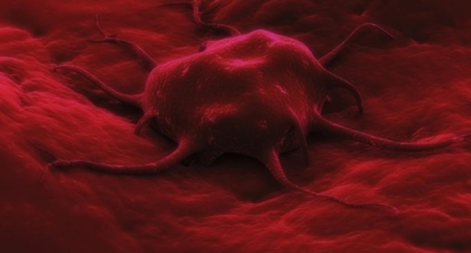 Severing nerves may shrink stomach cancers: Botox injections slow growth of stomach tumors in mice