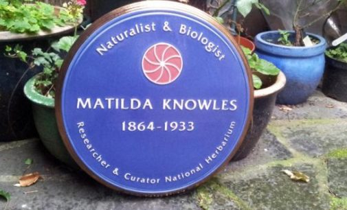 Irish botanist Matilda Knowles honoured after 150 years