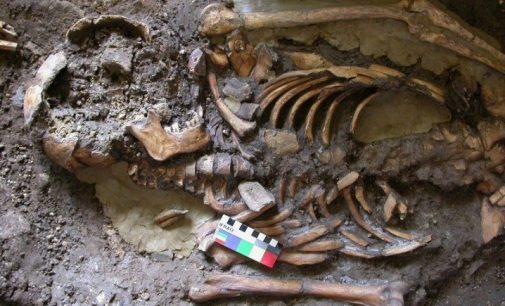 Irish-led team discover new strand of ancient European human genome