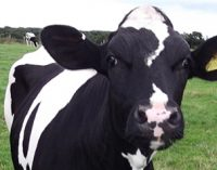 Teagasc Appoints Two New Dairy Specialists