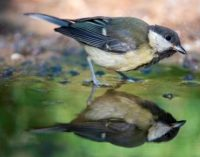Climate Change Occurring Faster Than Birds Can Adapt