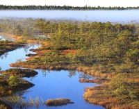 Widespread Drying of European Peatlands in Recent Centuries